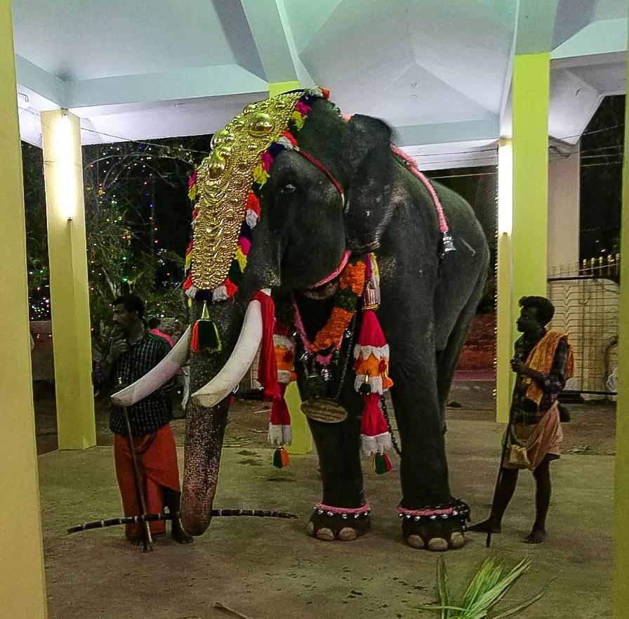 elefanti india simona anedda
